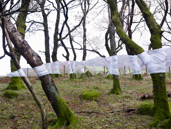 Olsen Zanders fabric wrapped trees.