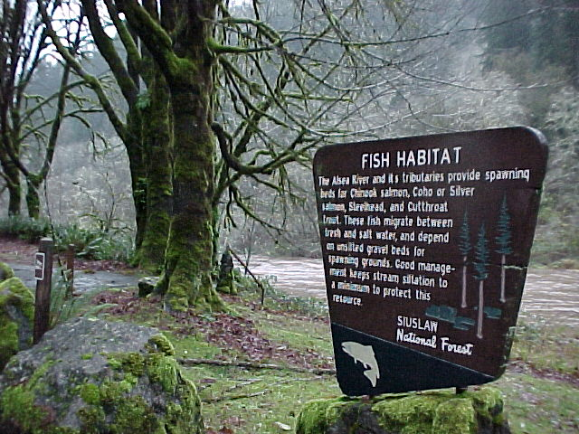 Alsea River Fish Habitat
