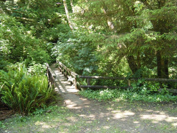 Sturdy Bridges Over Cape Creek