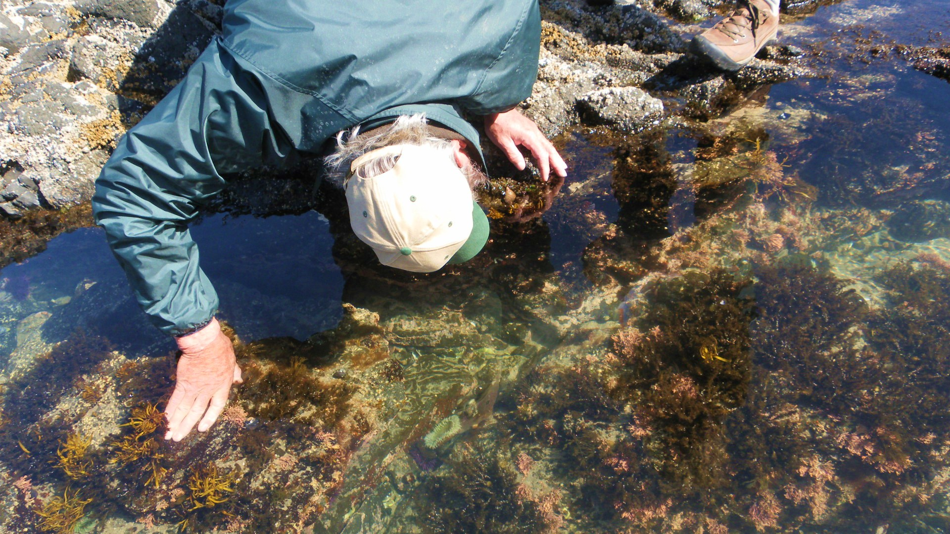 Tidepooling with the Rangers