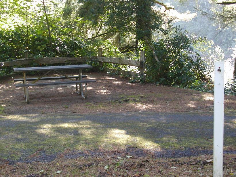 Some Campsites Border Alder Lake
