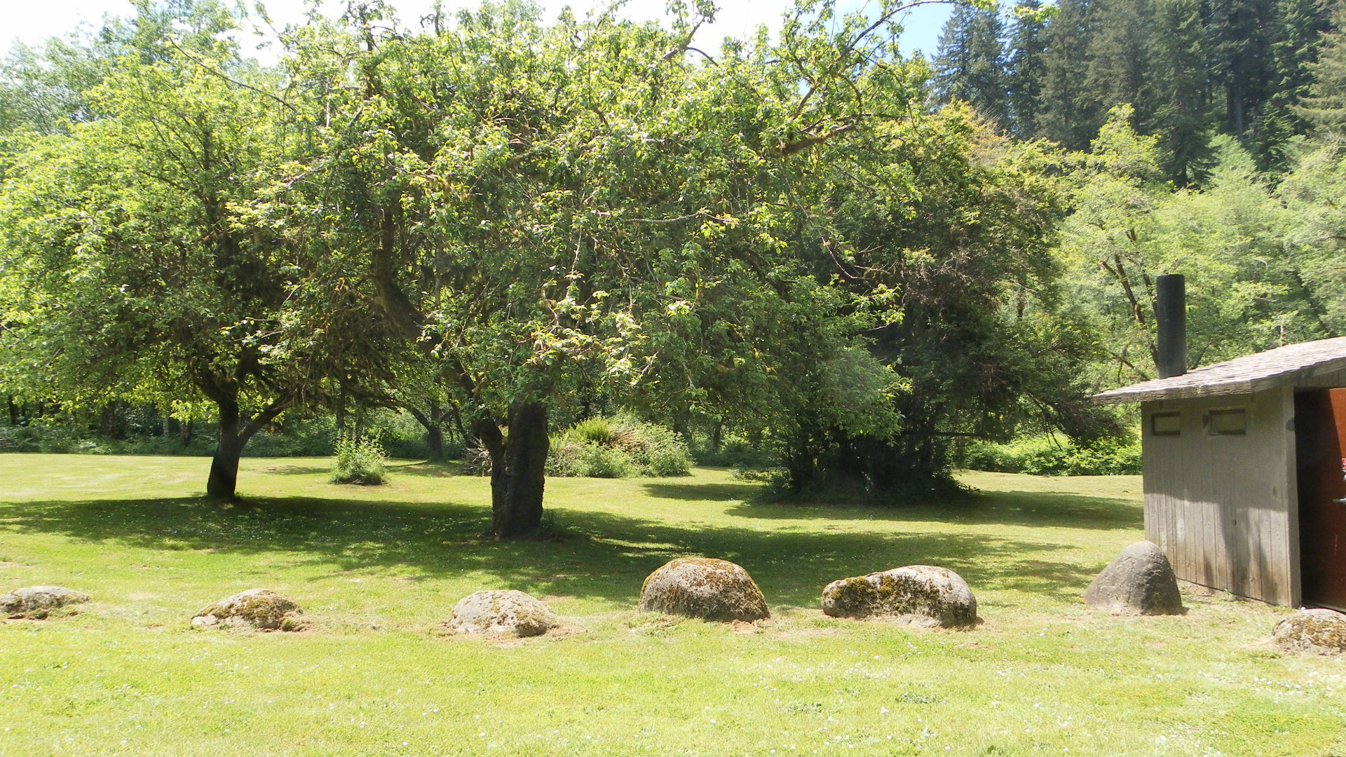 Apple Trees at Canal Creek