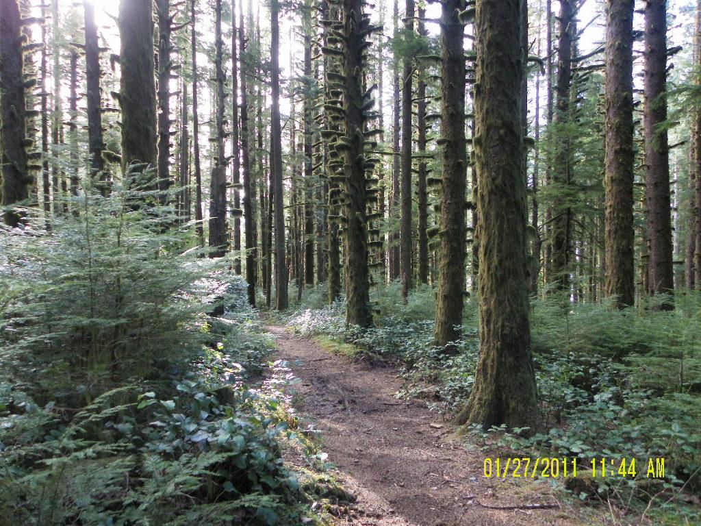 Oregon Coast Trails near Florence, Oregon