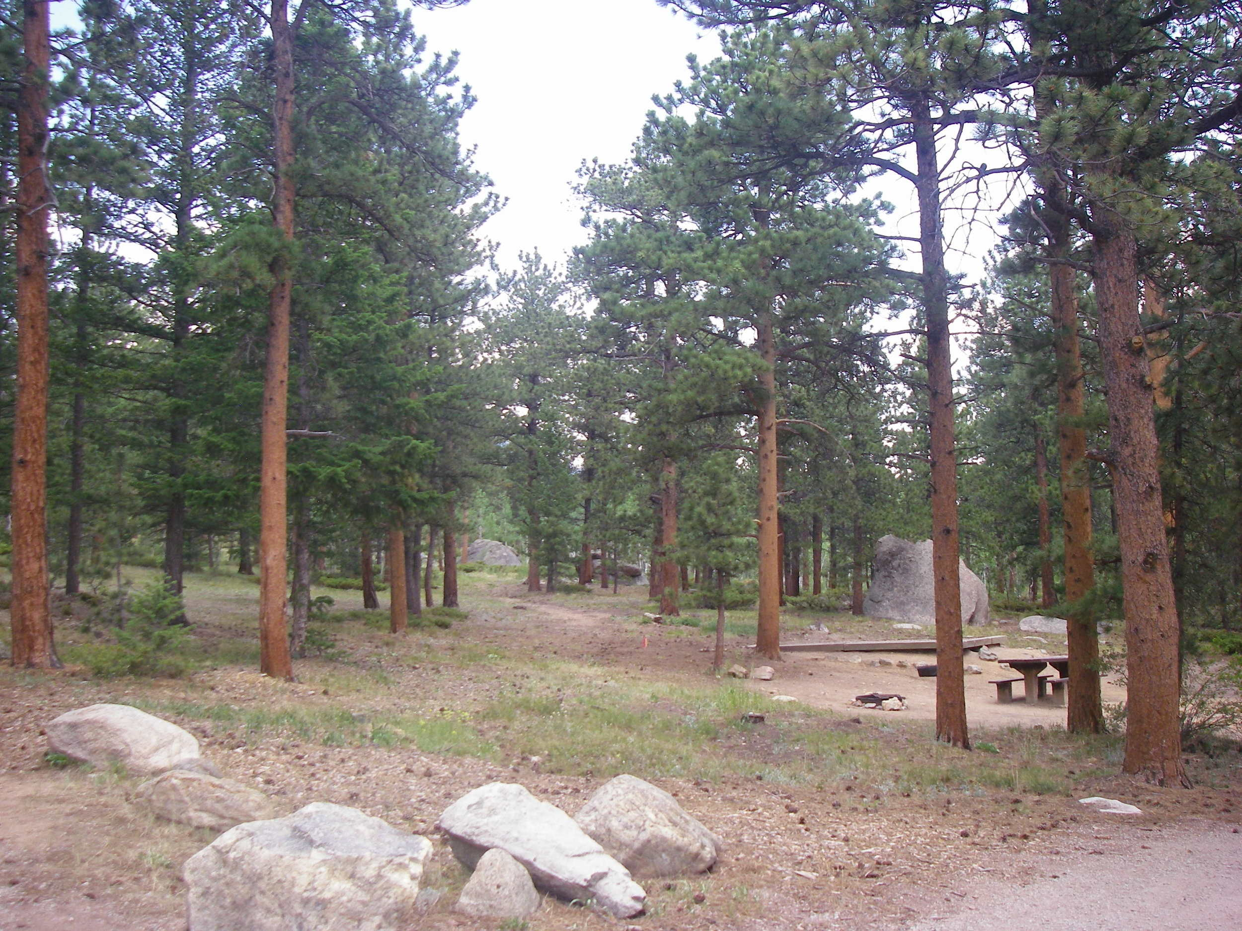 Olive Ridge Campground, Arapaho NF, CO