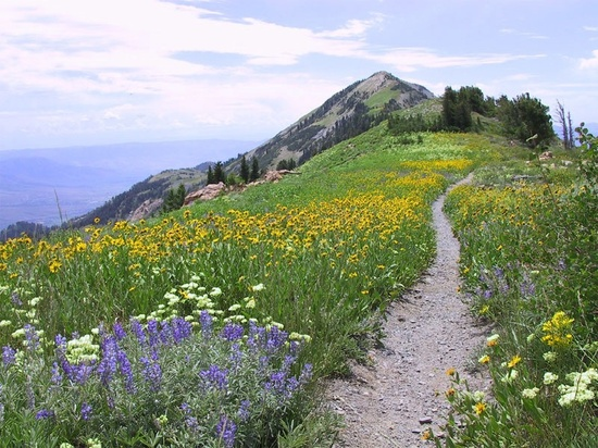 Trail in the Uinta-Wasatch/Cache National Forest
