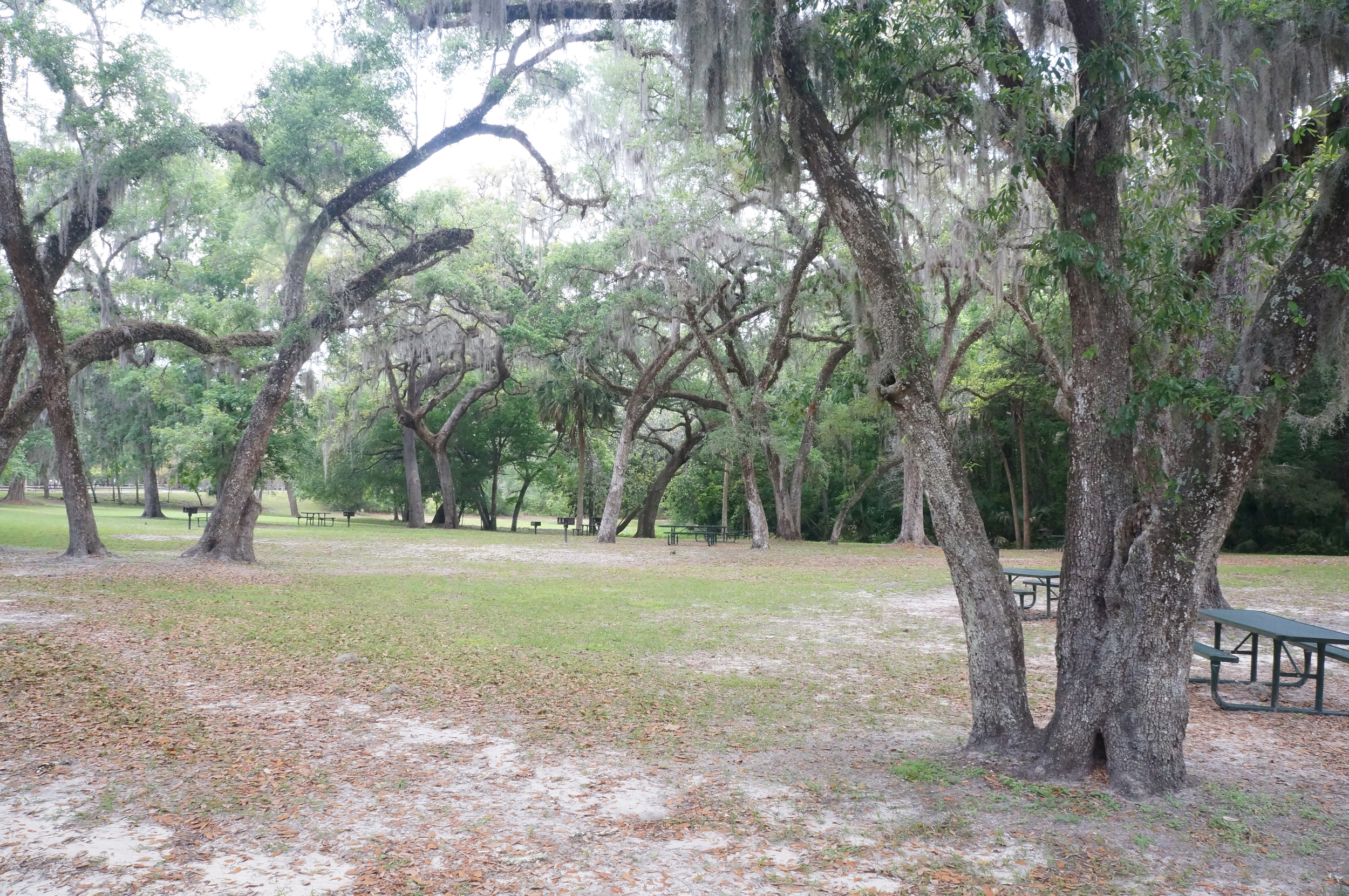 Picnic area near the springs