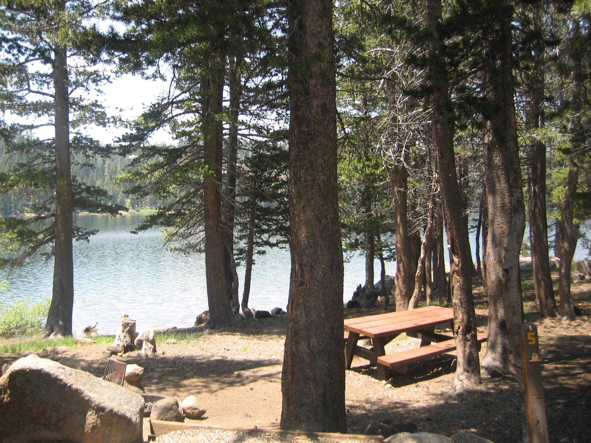 Towering pines provide shade