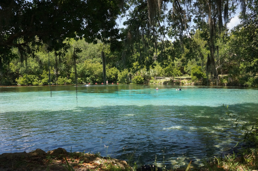 Silver Glen Springs, Ocala National Forest, Lake George Ranger District, Florida