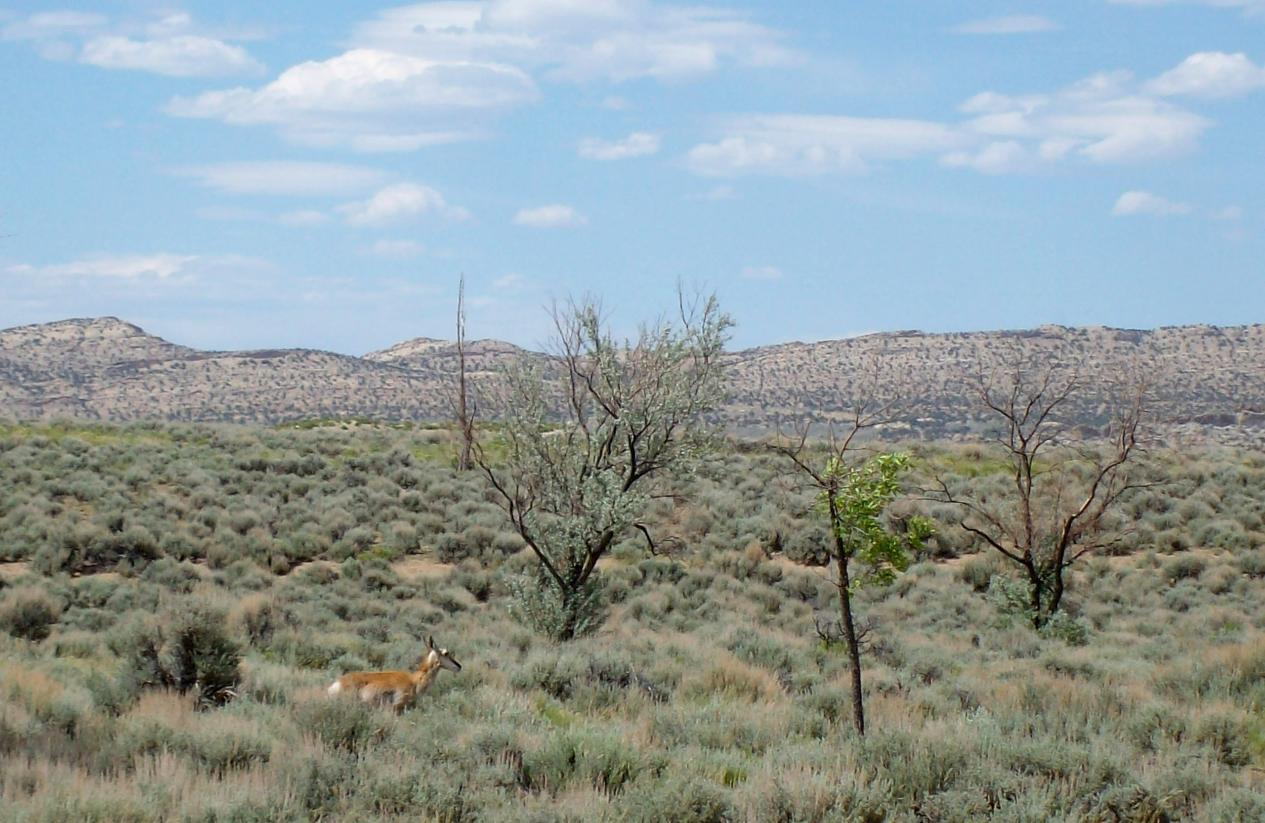 Antelope are a common sight