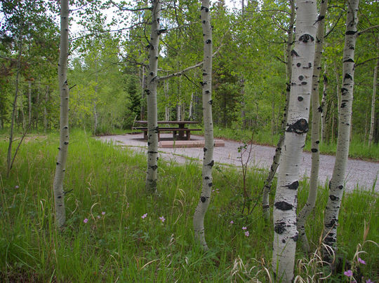 Shaded by quaking aspen in Lodgepole Campground
