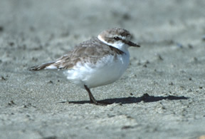 Photoby: David Pitkin, USFWS - click on photo to read article