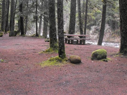 Campsites on Olallie Creek