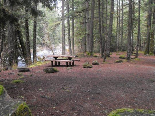 Campsites on McKenzie River