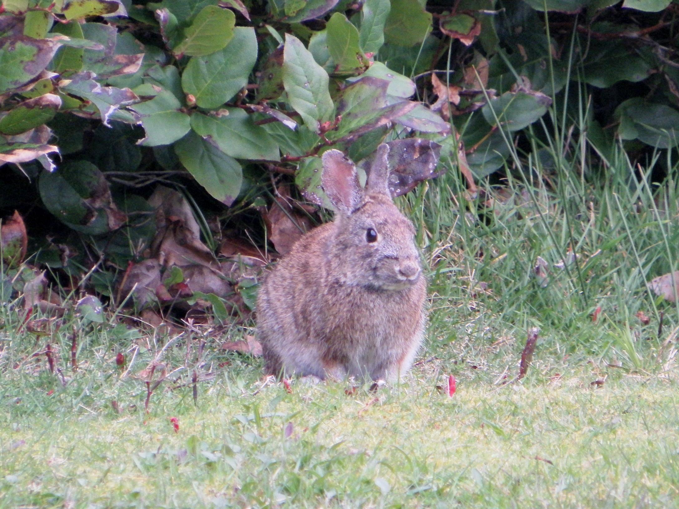Tillicum Beach Campground - Brush Bunny