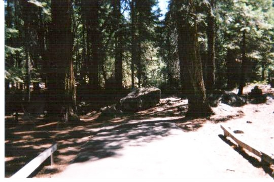 Shady campsites in Cherry Valley Campground east of Sonora, California