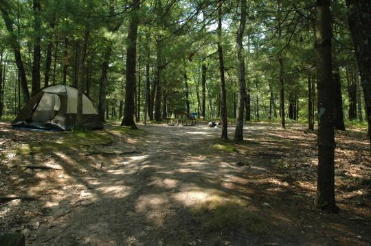 Scenic forest camping
