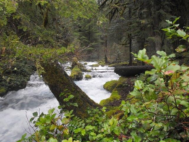 Olallie Creek in springtime