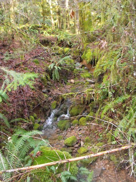 Mona Creek