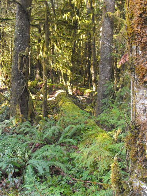 HJ Andrews Experimental Forest