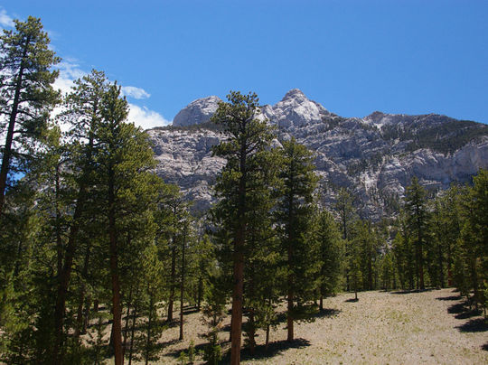 Foxtail Campground, NV