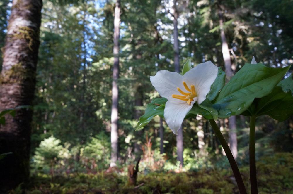 CleatorBend-wildflowers.jpg