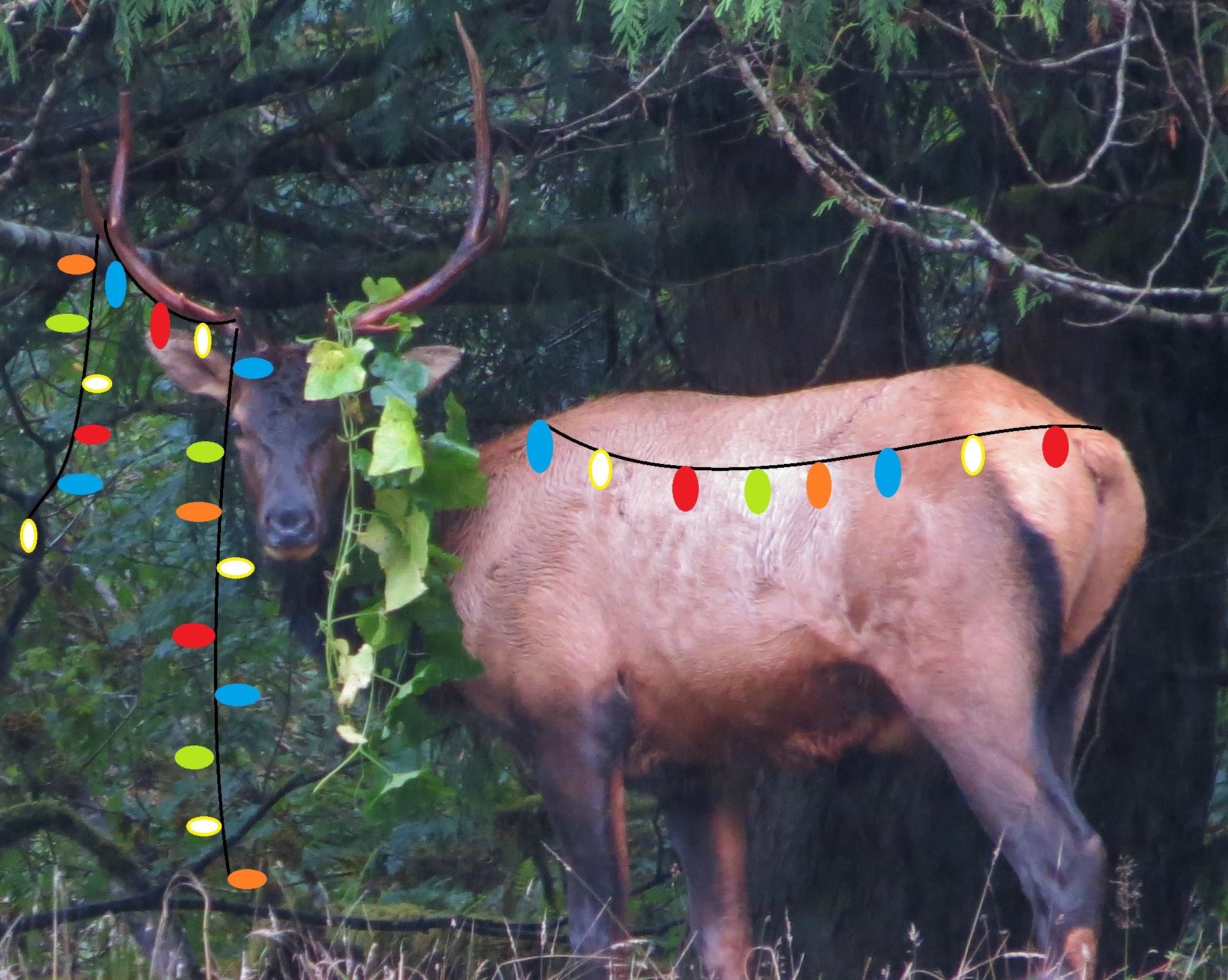 ElkBull-Christmas.JPG