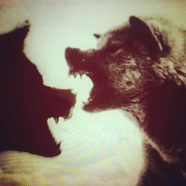 Bloodlust of the wolf (2015)   Performed by about.theWindow, this is a work of live cinema in collaboration with  Simon Tarr .