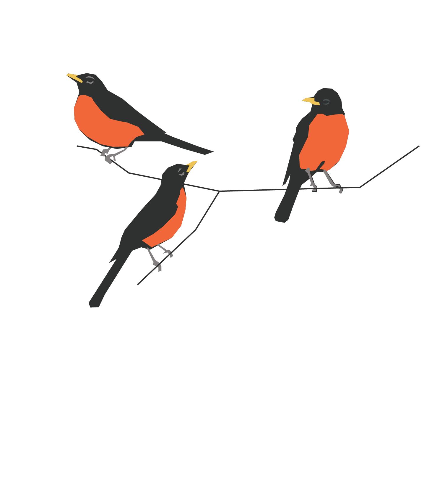 bird3_Robins.png