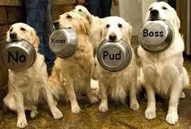 xmas pudding dog.jpg