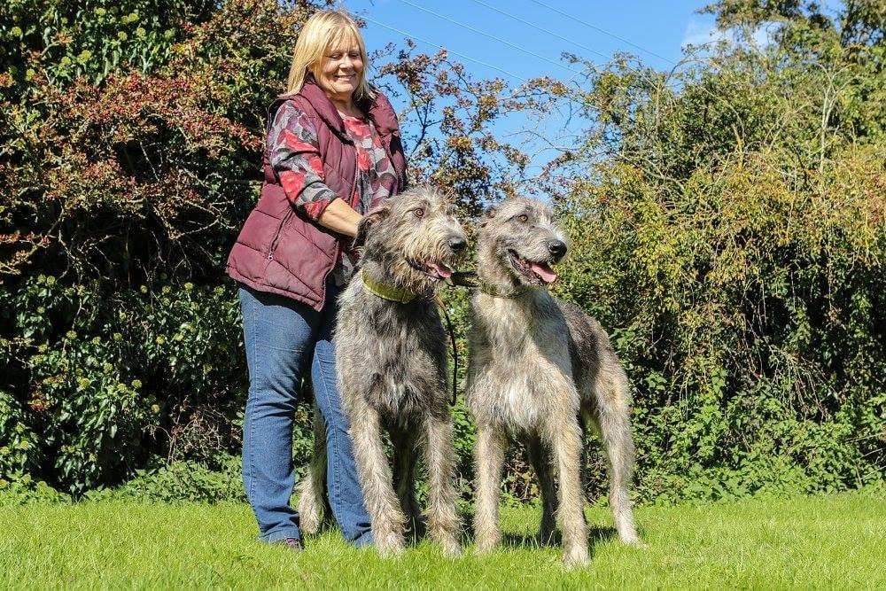 _The judge for the three Special Award Classes will be Ms Sheena Evans - please give her your support._  For those of you who are thinking of owning an Irish Wolfhound this is an excellent opportunity to meet the committee, owners, breeders and of course the Irish Wolfhounds themselves.