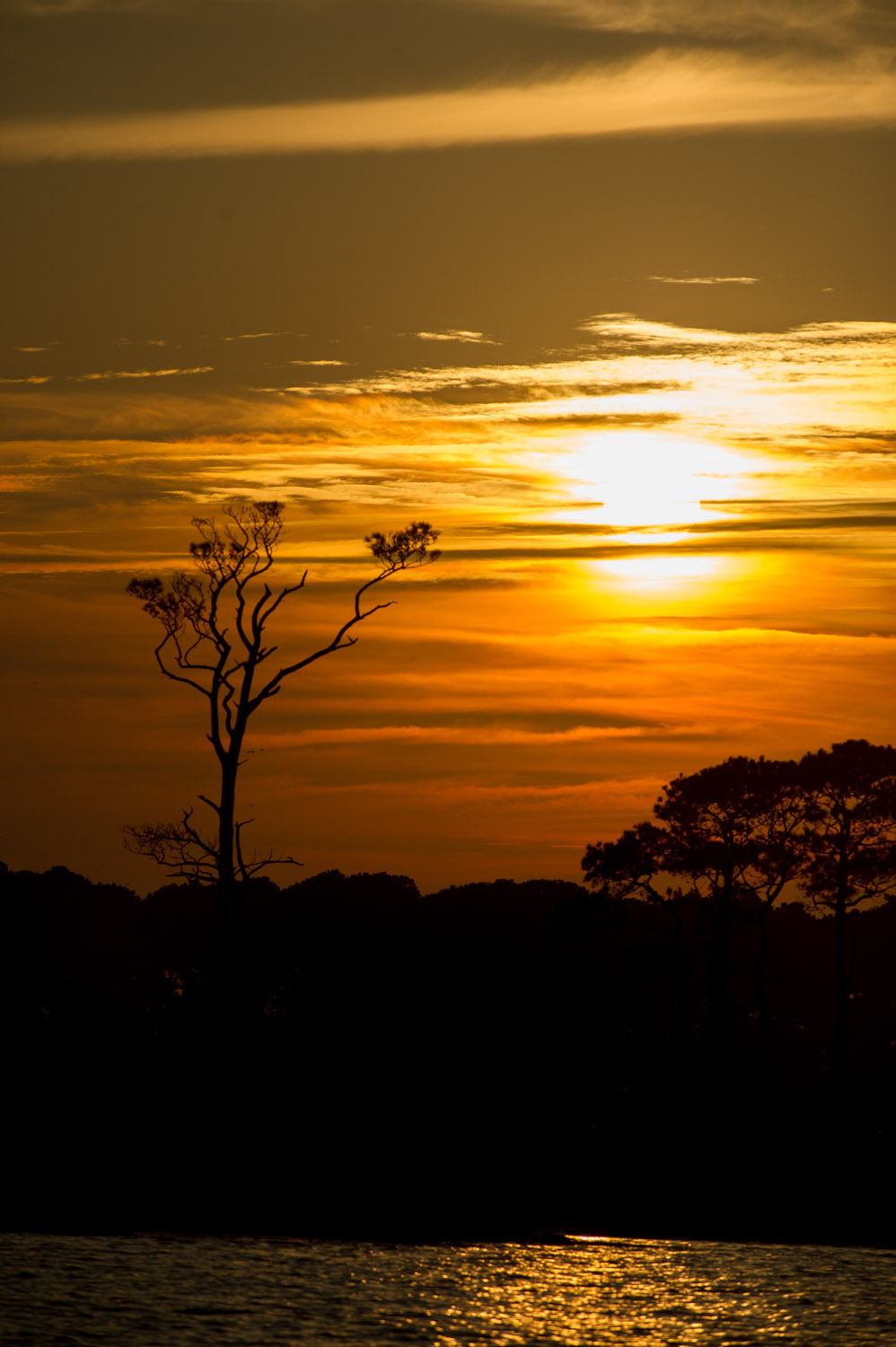 A large dead tree silhouetted against the sunset.