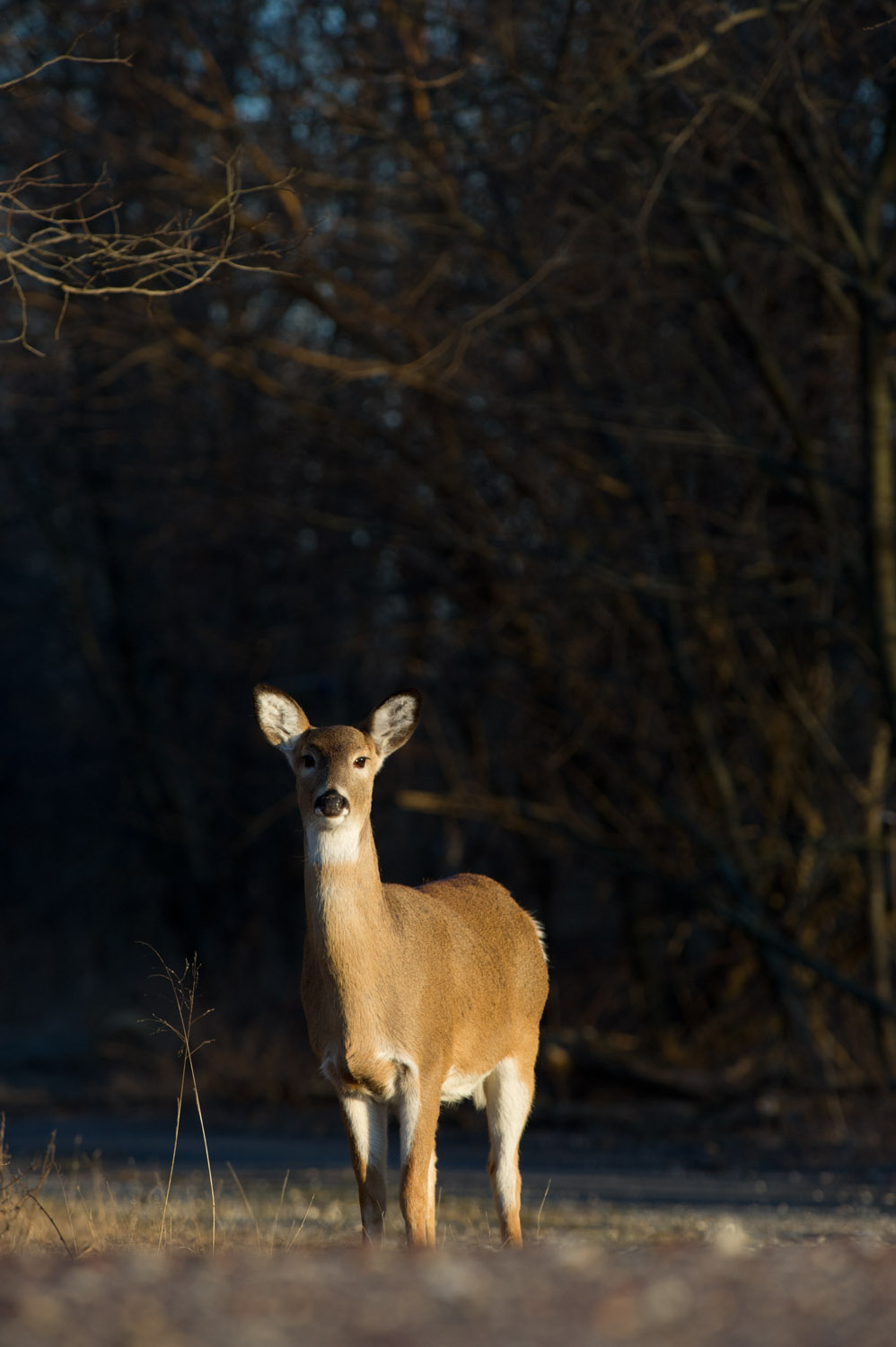 Every time I would press the shutter button this doe would look directly at me. Taken at Palmyra Cove Nature Park.
