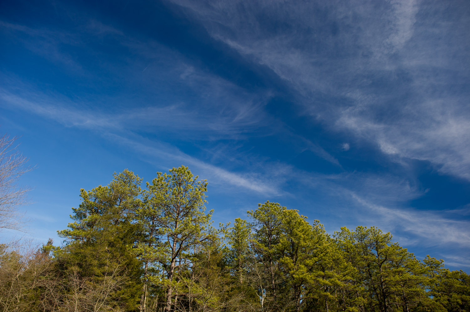 Taken at Wharton State Forest in the NJ Pine Barrens.