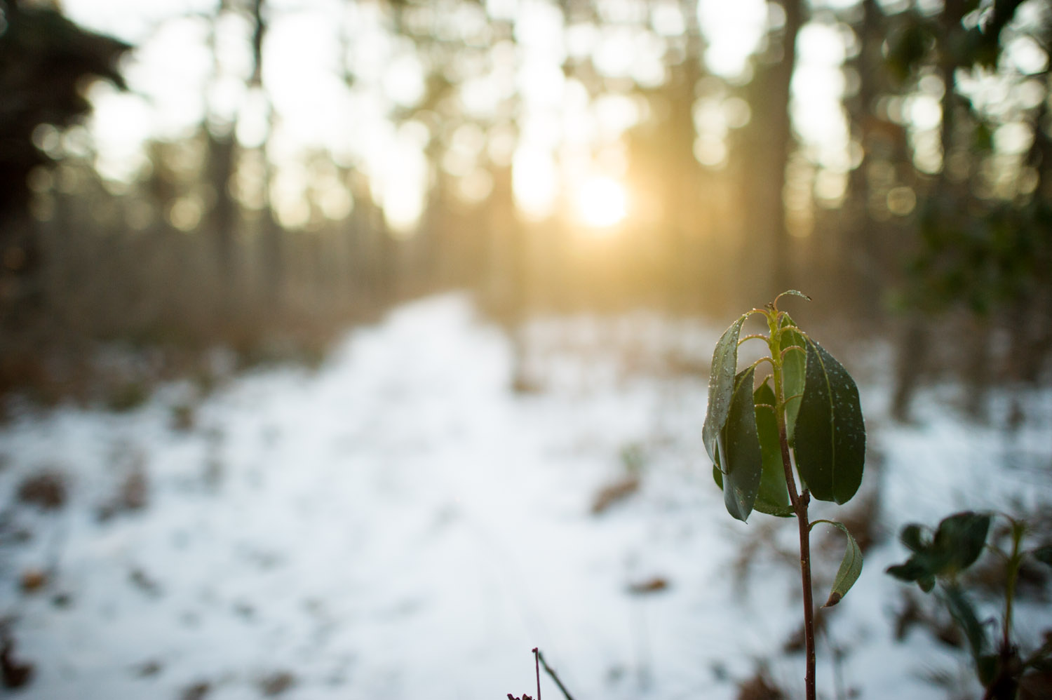 The leaves were drooping pretty good from the cold and bit of frost on them.