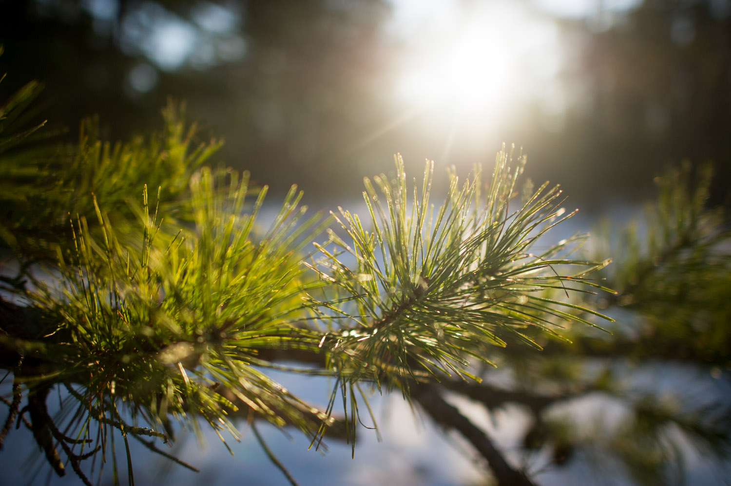 The only color in the pine barrens this time of year was the bright green of the pine branches.