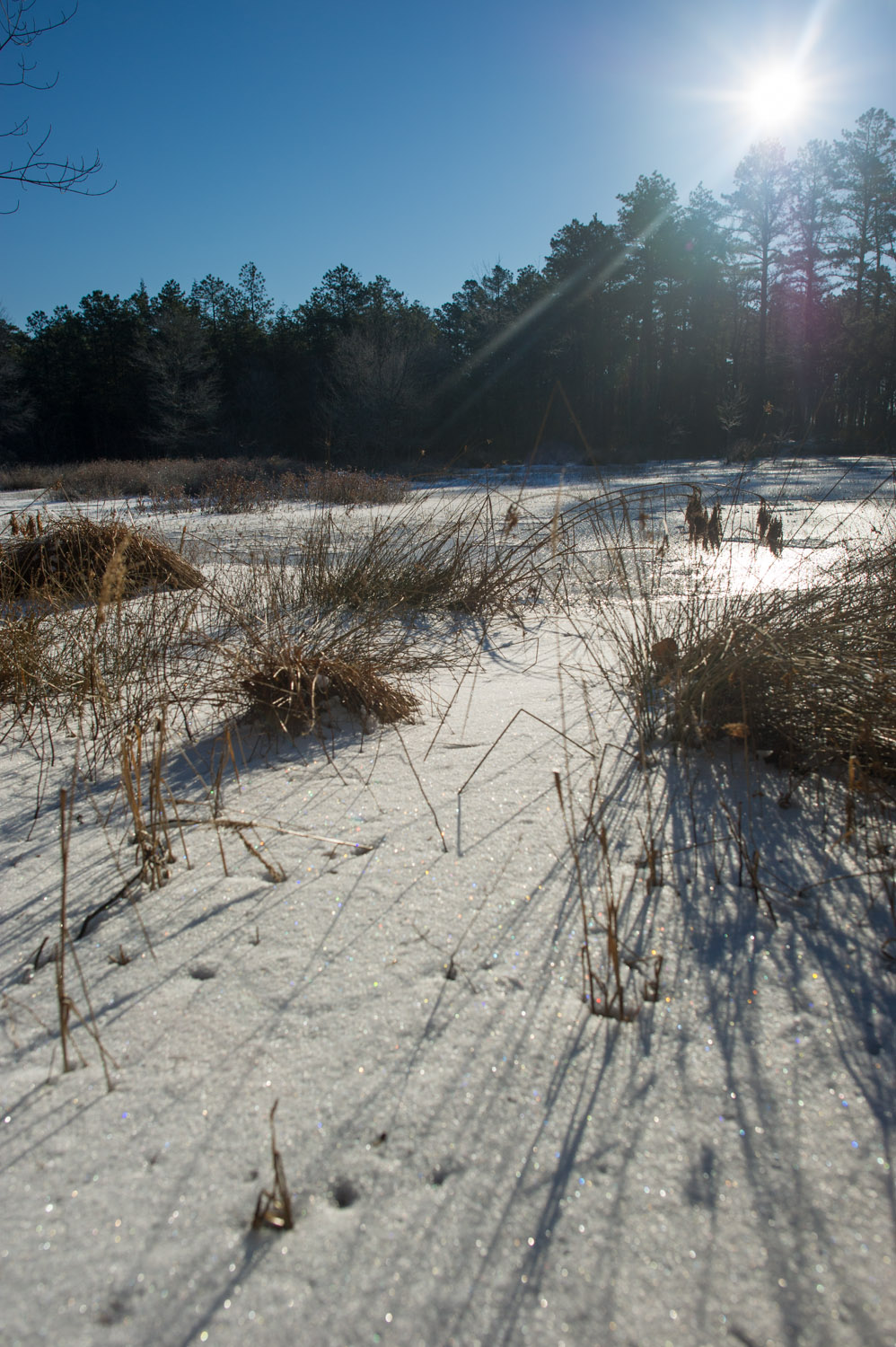 A small frozen pond that we came upon was a great spot to sit for a moment and soak up the sun.