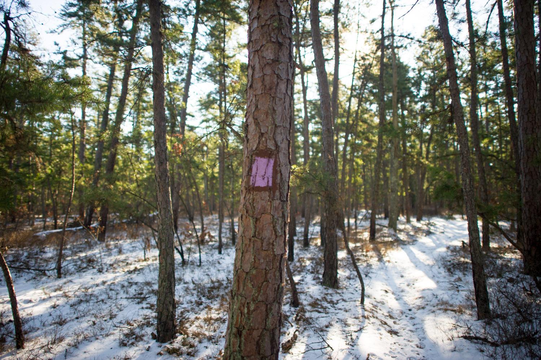 We took a quick detour onto the purple trail.
