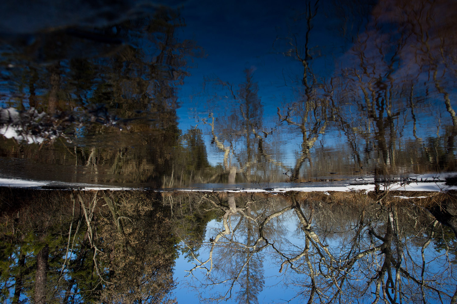 Since I actually took this photo upside down while hanging over the edge of the river I figured I'd just leave it this way to really mess with you. Taken at Wharton State Forest in the NJ Pine Barrens.