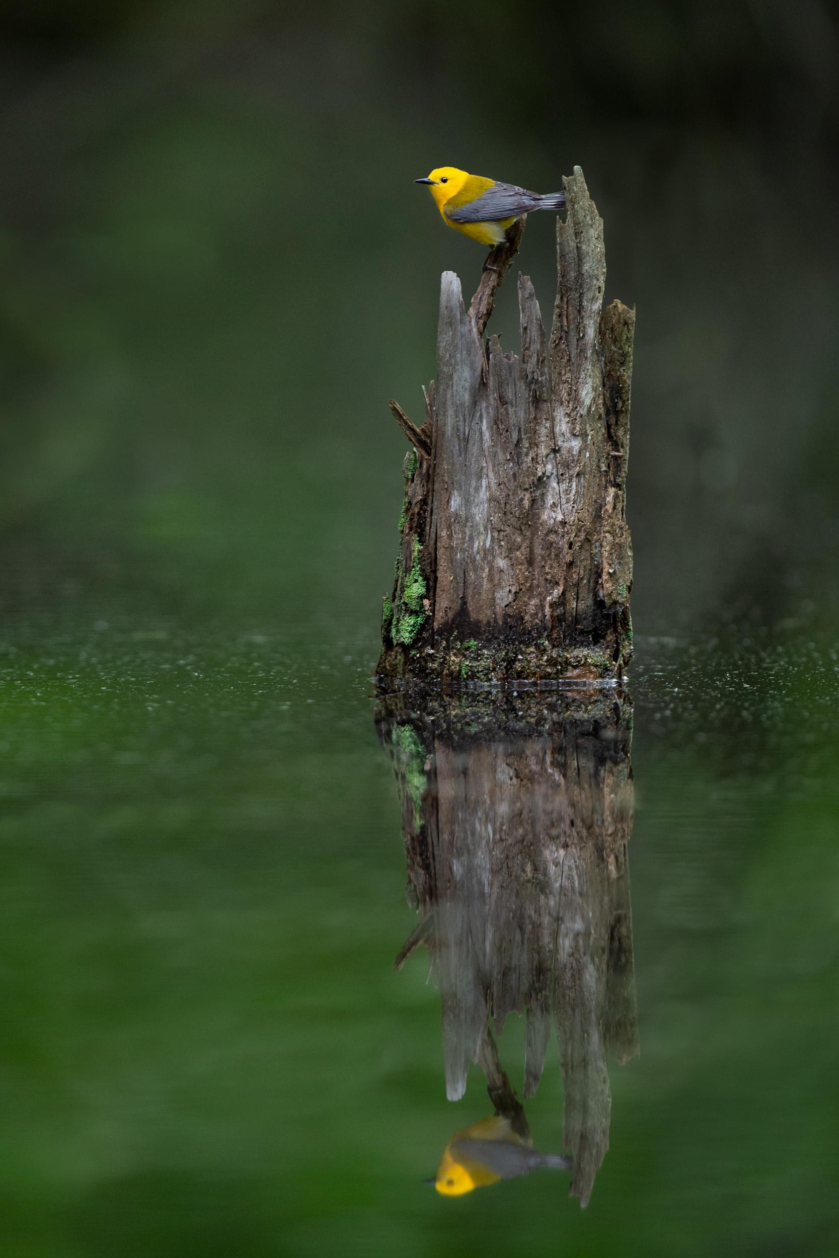 05_The Stump.jpg