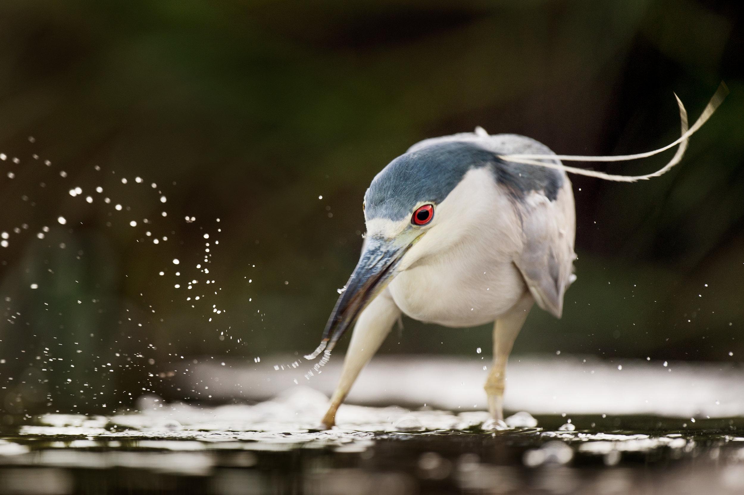 10_Fishing Action.jpg