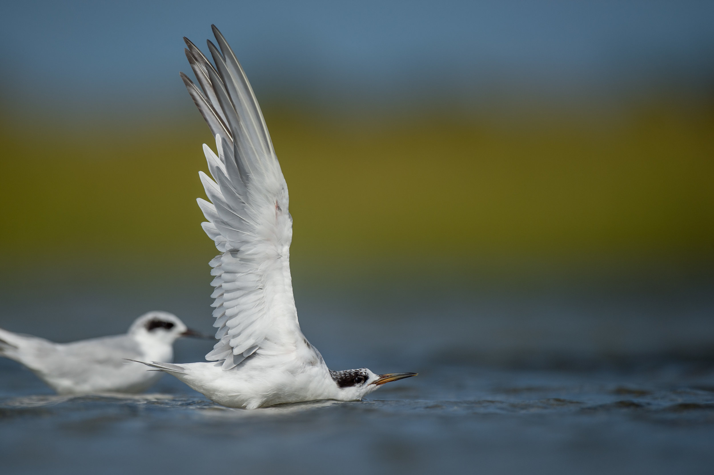 010_jersey_shorebirds.jpg