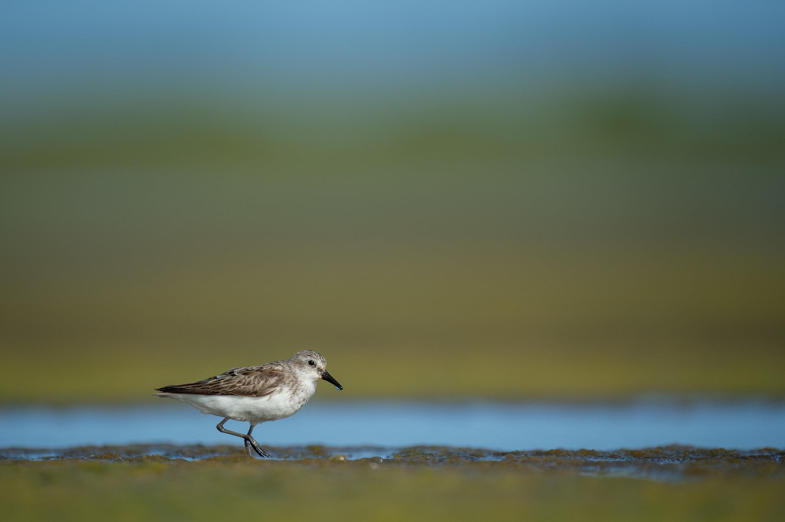 012_jersey_shorebirds.jpg