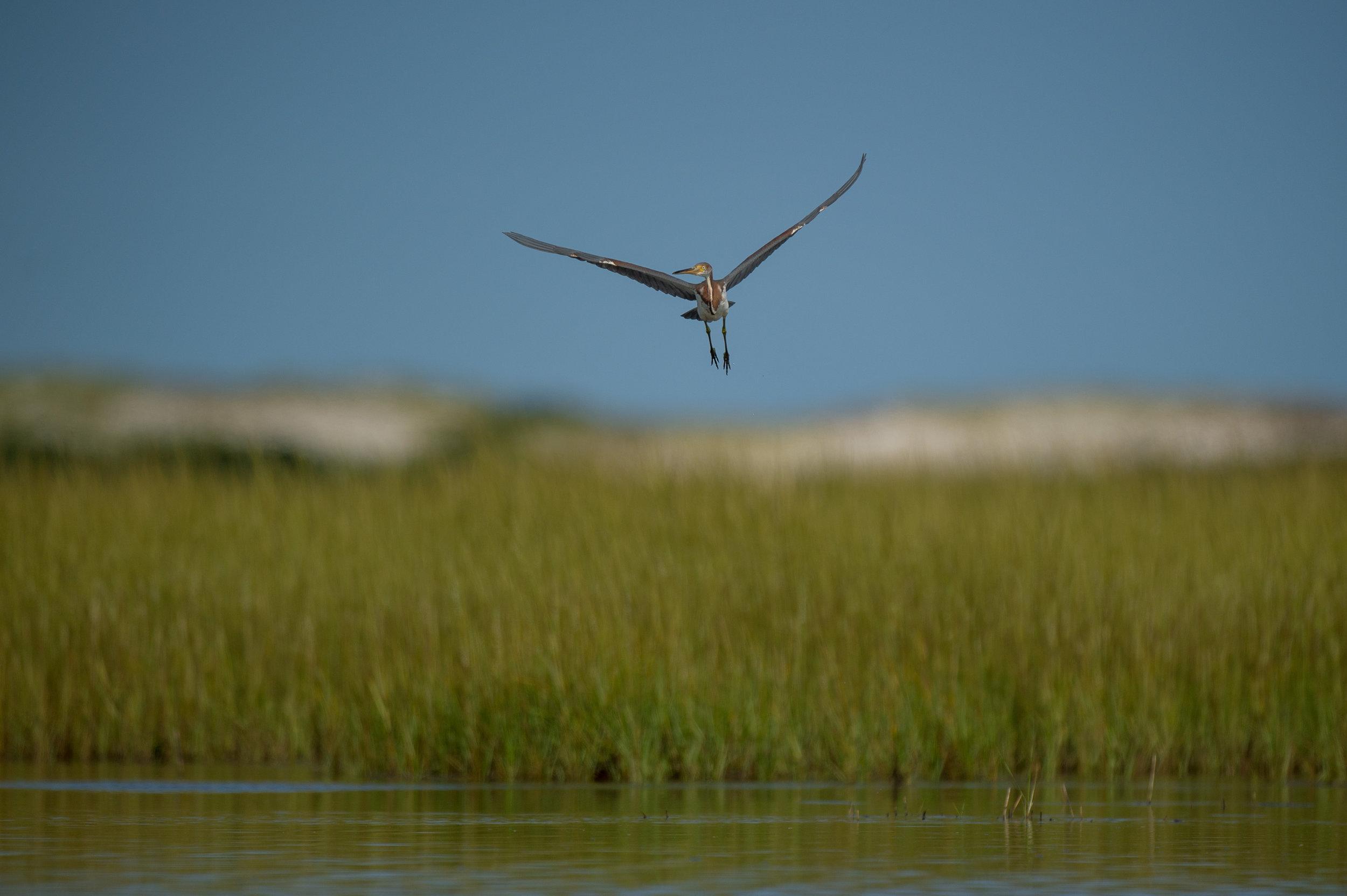 011_jersey_shorebirds.jpg