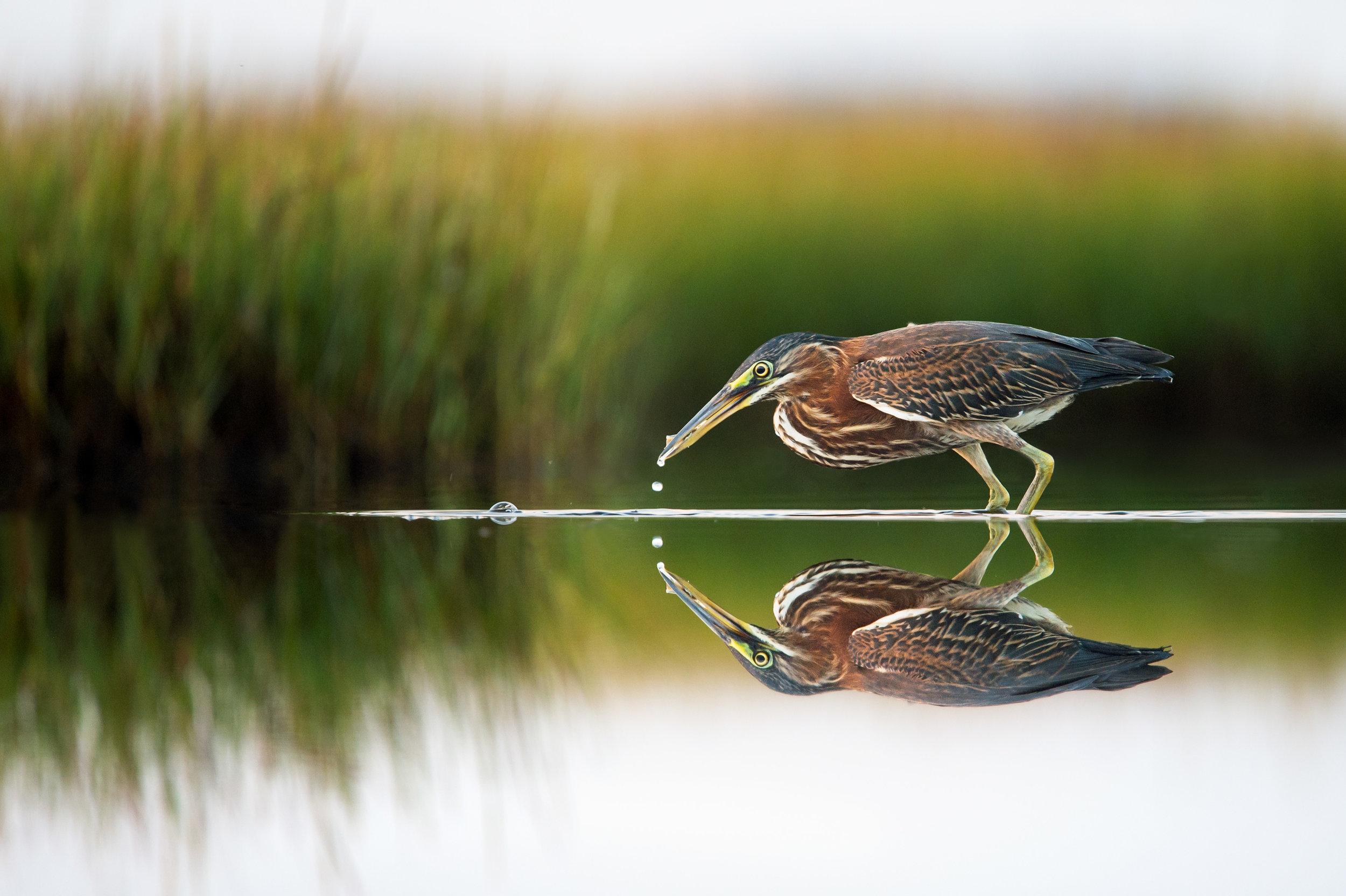 001_jersey_shorebirds.jpg