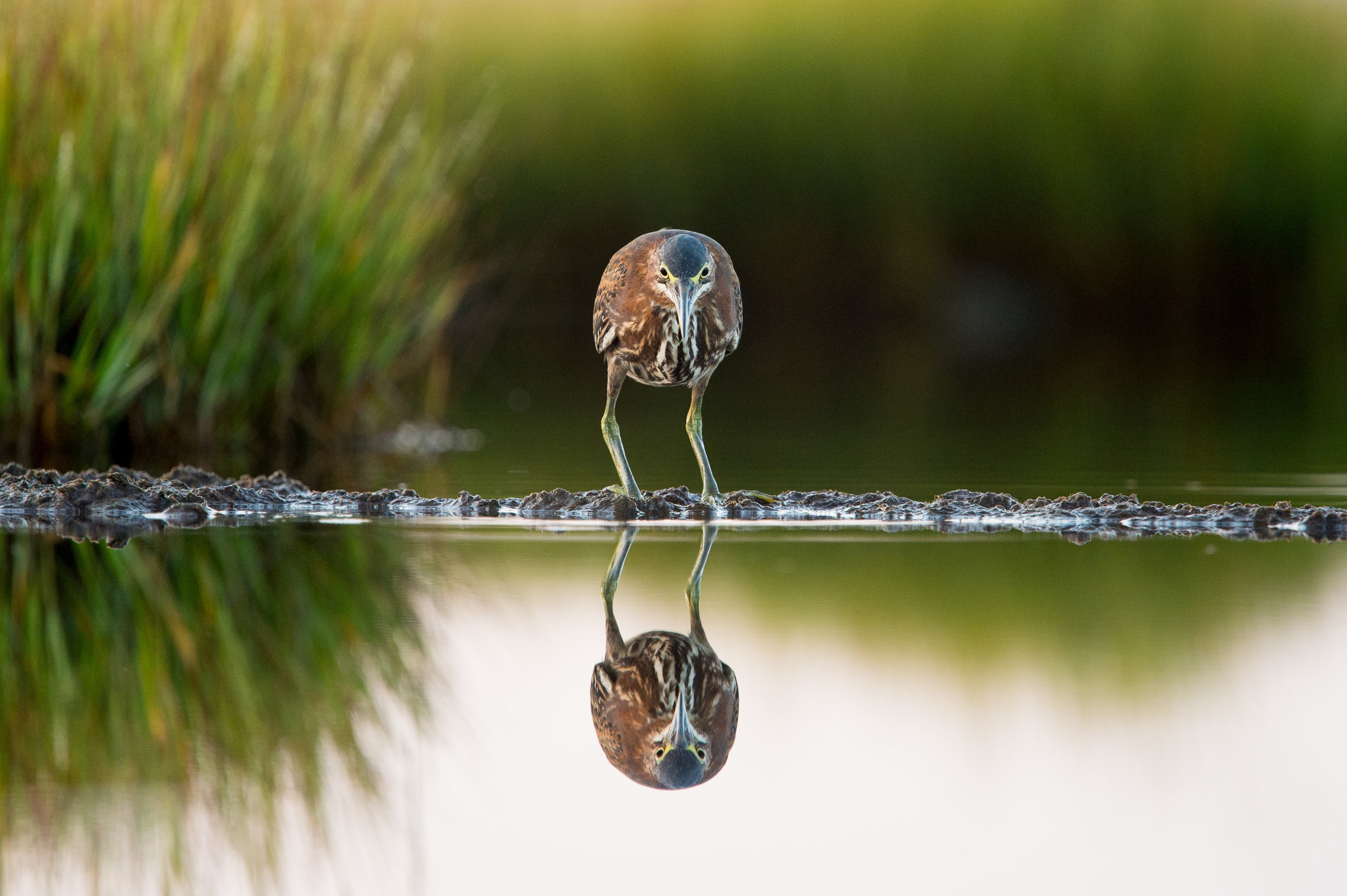 005_jersey_shorebirds.jpg
