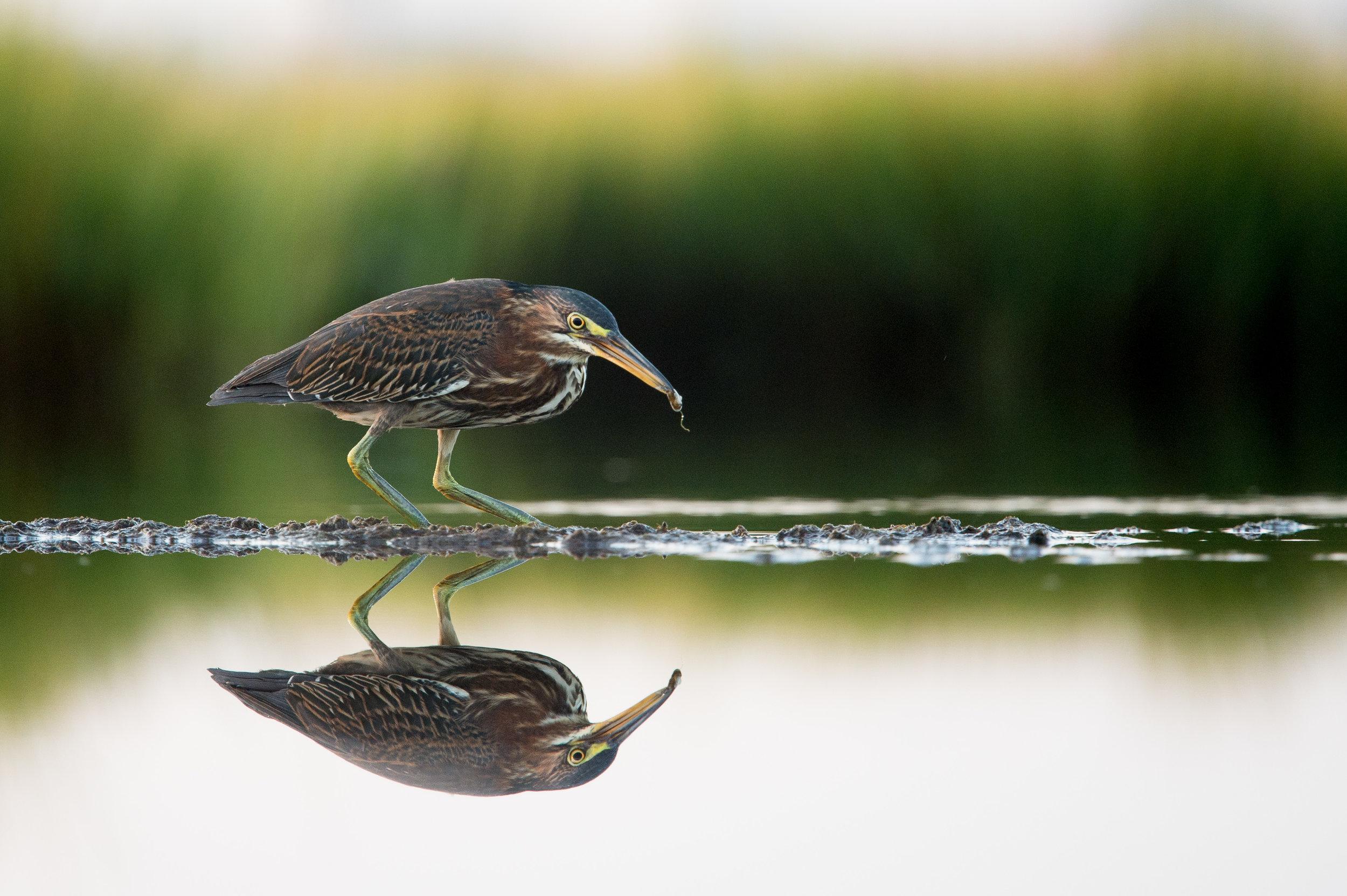 006_jersey_shorebirds.jpg