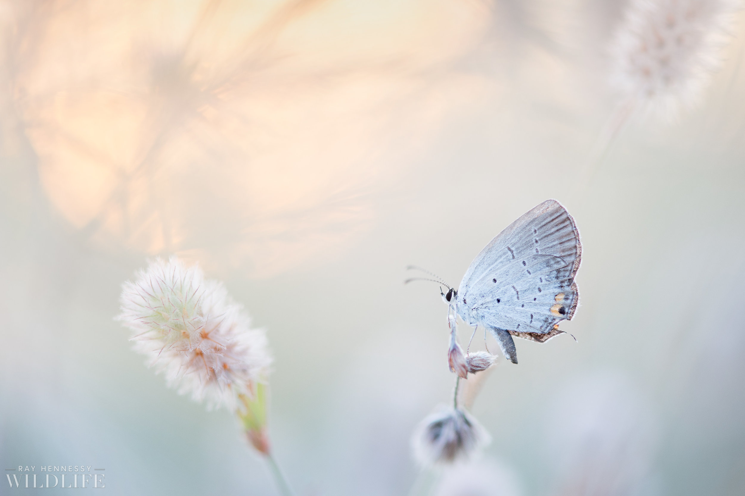 003_butterflies and insects.jpg