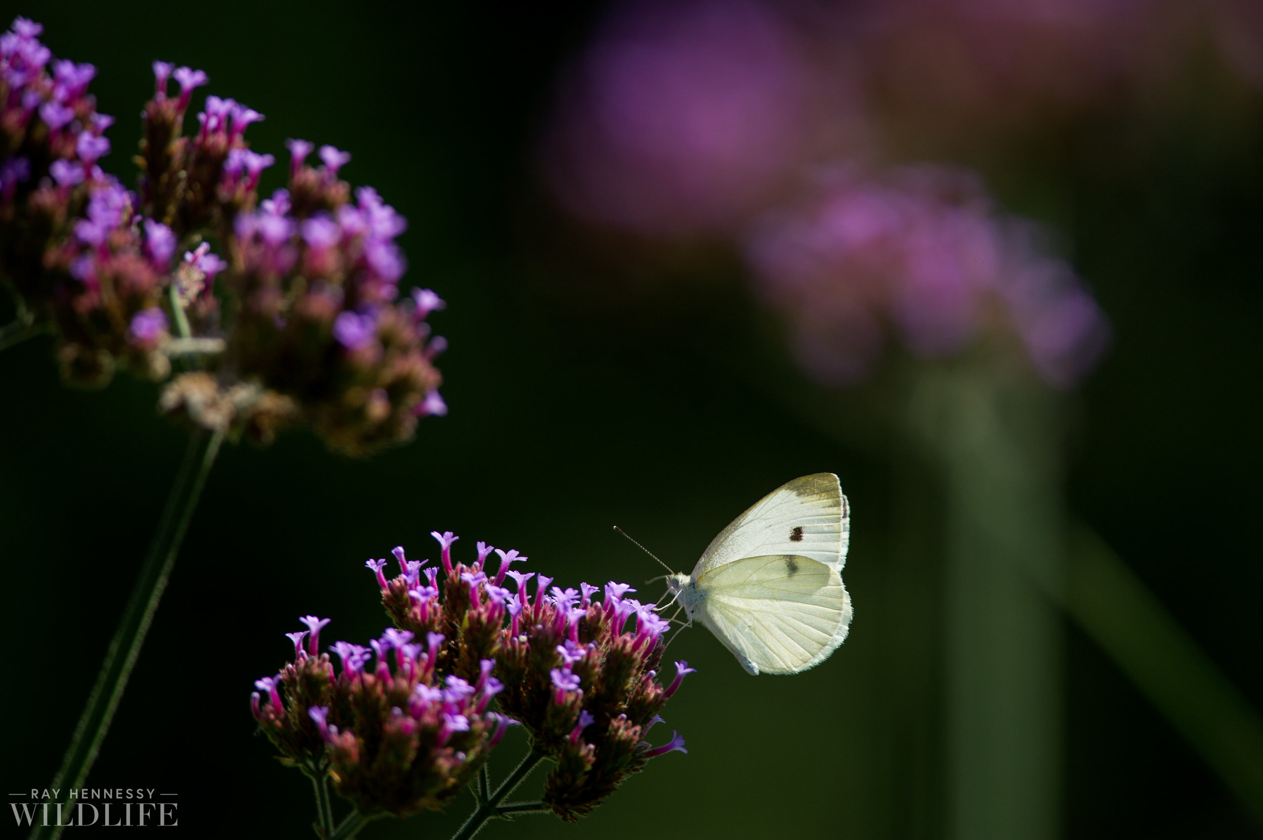 011_butterflies and insects.jpg