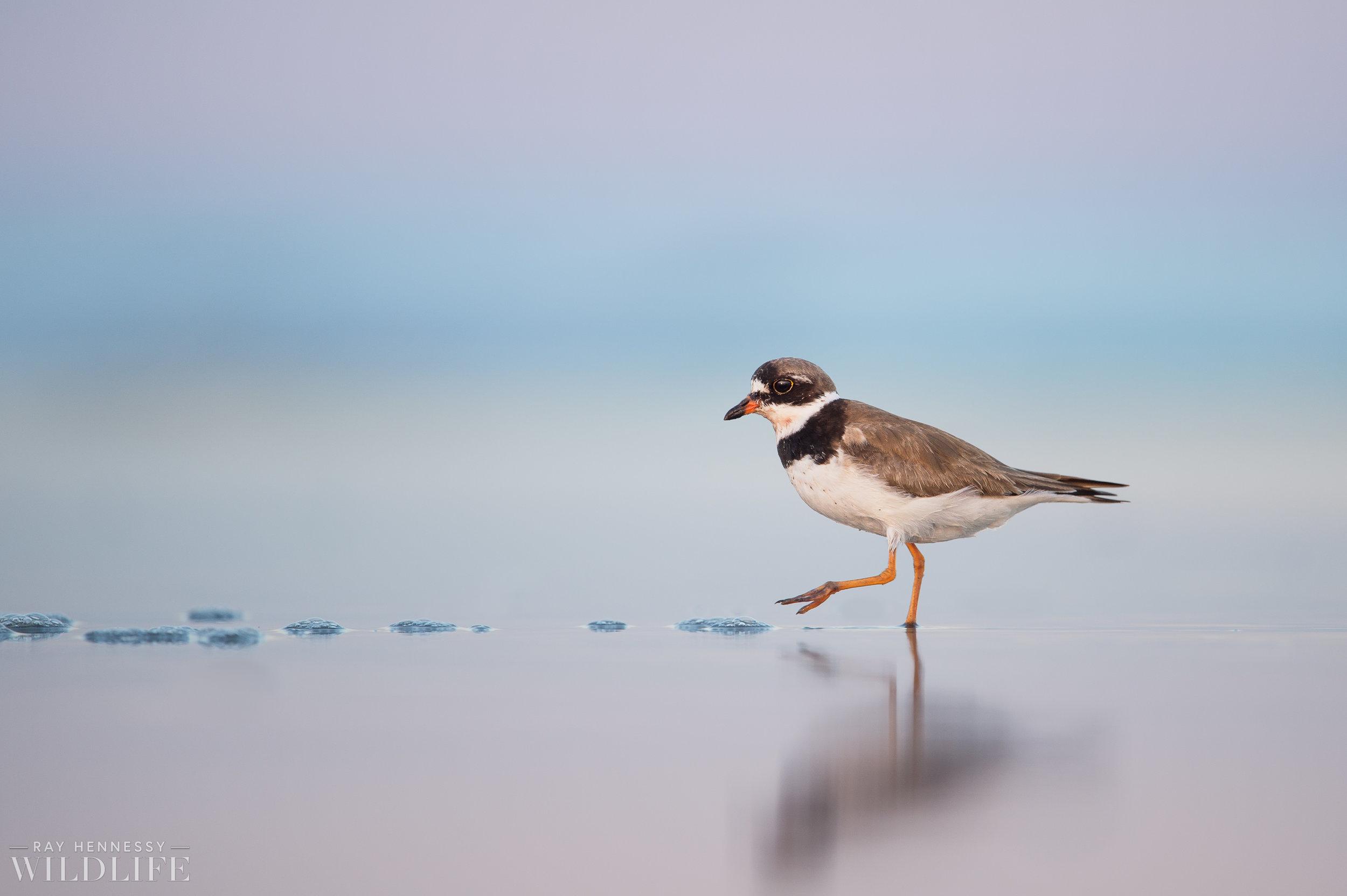 001_fall shorebirds.jpg