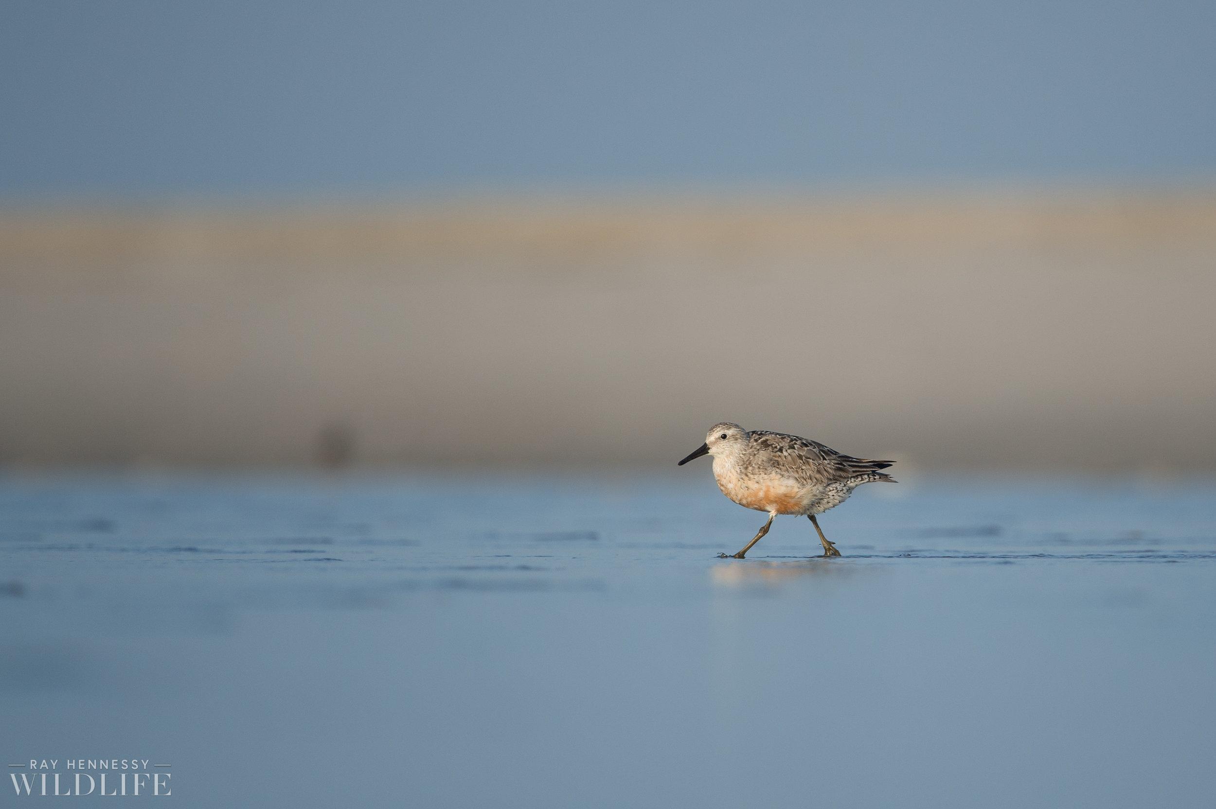 008_fall shorebirds.jpg